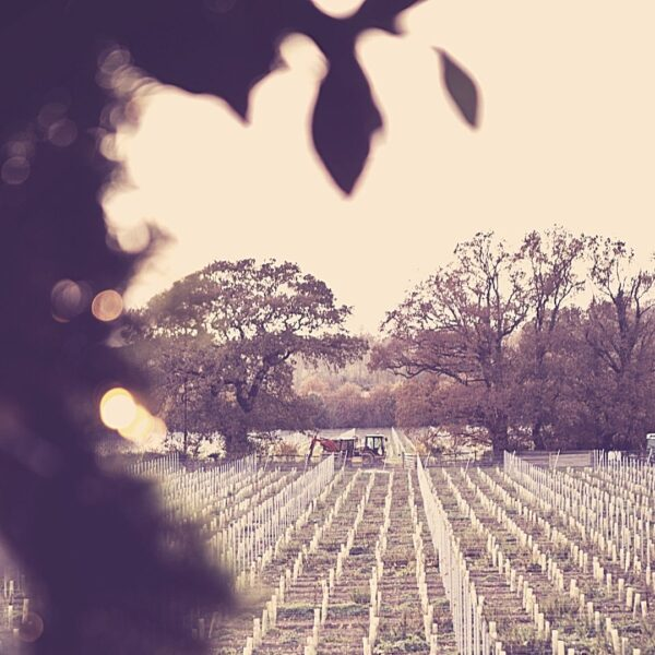 Oastbrook Chardonnay En Primeur